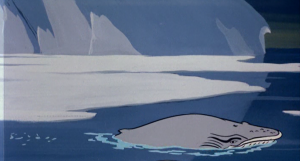 The rare Sam Waterston's Whale, with characteristic eyebrows.